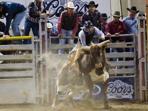 Cheering on a participant at Billings' PBR event